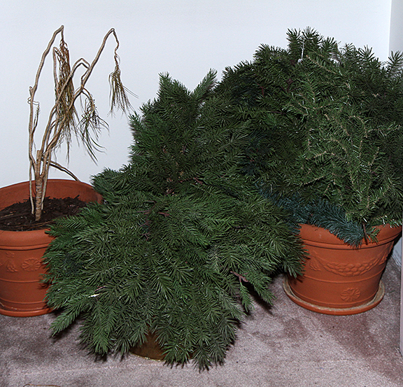 Masengills Specialty Clothing Store- A 100 year old East Tennessee Upscale Department Store - 210_1.jpg