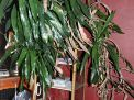 Masengills Specialty Clothing Store- A 100 year old East Tennessee Upscale Department Store - 19_1.jpg